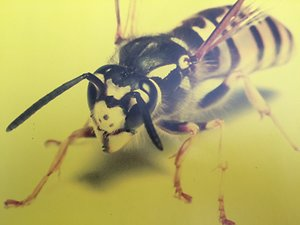 Pests treated and Prices. wasp